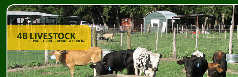 Welcome to 4B Livestock.  We are a USDA licensed facility specializing in a consistent model of Bovine, Ovine, Caprine and Porcine for Biomedical Research.
